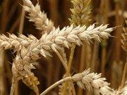 Wheat Futures